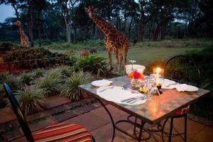 Посетить «Поместье Жирафов» в Кении