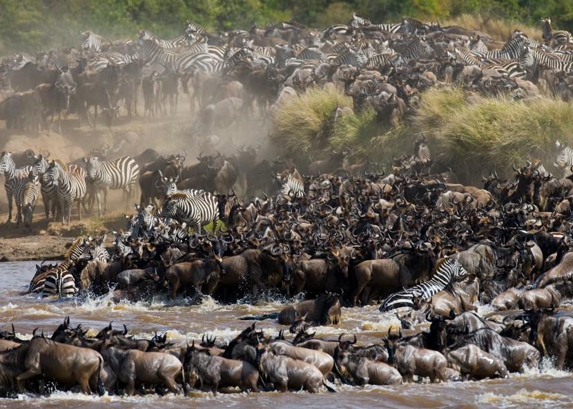 Путешествие на места миграции животных в Танзании