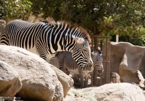 Использование диких животных в развлечении туристов, за и против